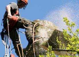 Pembrokeshire Tree Services